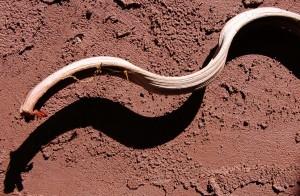 Snake or twig?