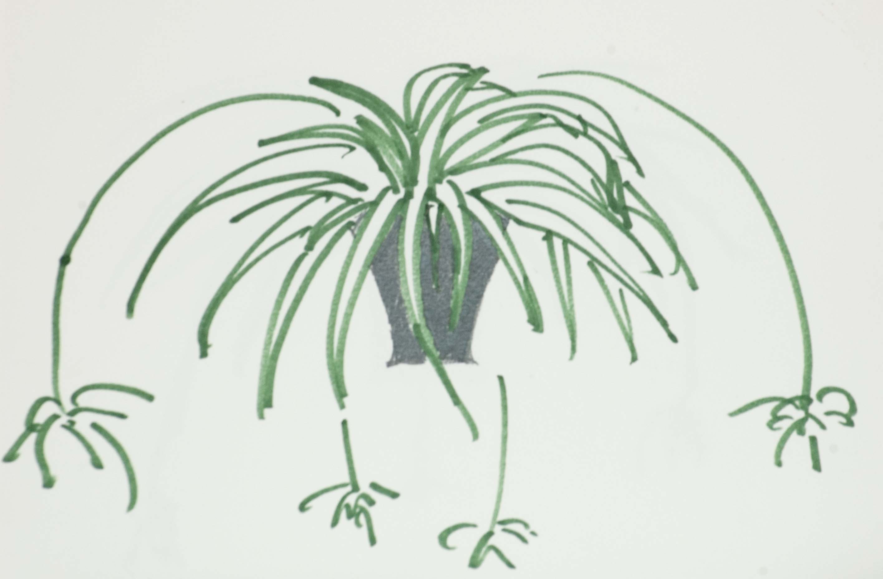 gareth morgan spider plant metaphor Part 1 draws on the ideas of gareth morgan, a pioneer in the use of metaphor to   projects, for example, he offers the metaphor of a spider plant you can use.