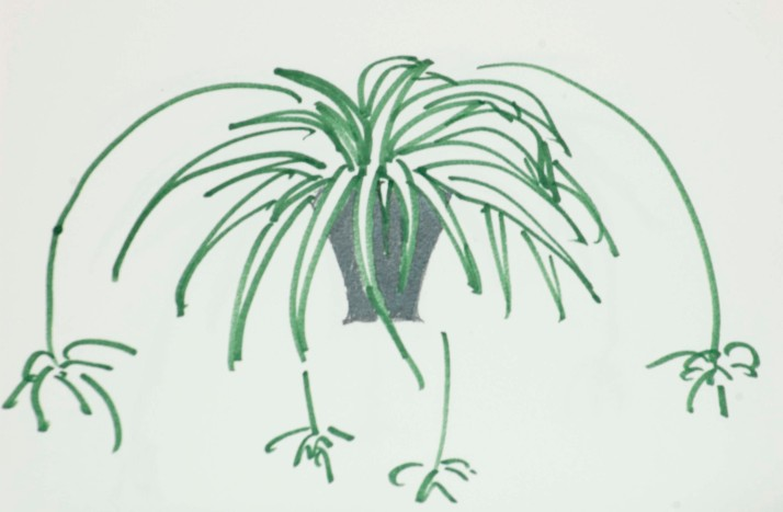 gareth morgan spider plant metaphor Gareth morgan provided a rich and plant such as encyclopedia af howeverconclusion morgan advocates using the metaphor as a helpful.