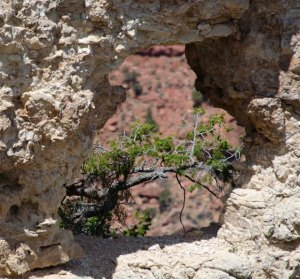 A tree in a hole...in Grand Canyon.