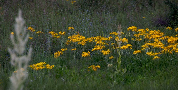 cb flowers 6