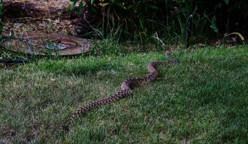 garden-snake1
